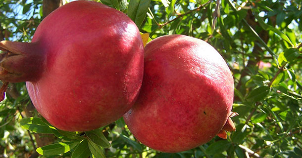 Benefits-of-the-Pomegranate