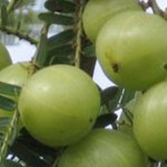 Natural Ways to Treat Grey Hair with Amla