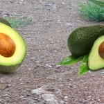 Is Avocado Good For Your Skin