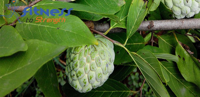 Custard Apple