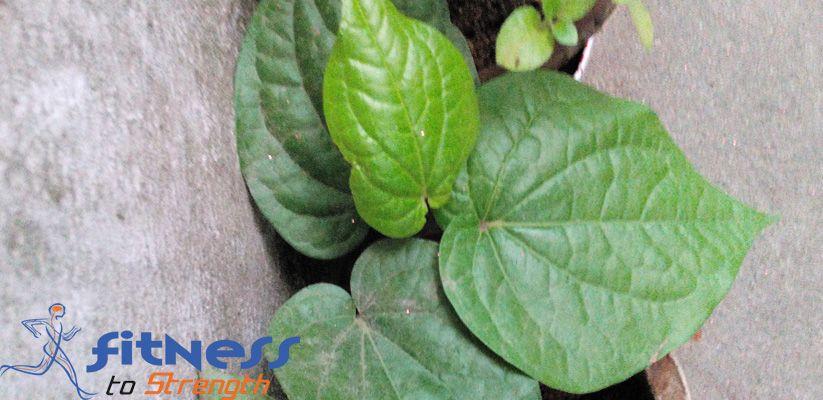 betel-leaf